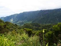 Agapanthusen blommar i bergen i norden av ön av madeiran Arkivfoton