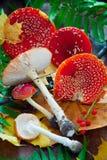 Agaric de mouche à champignons Photo libre de droits