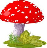 Agaric de mouche Illustration Stock