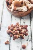 Agaric honey mushrooms Stock Photography