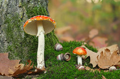 Agaric on moss with acorn Stock Image