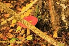 Agarico di mosca allucinogeno del fungo sotto l'albero Immagine Stock