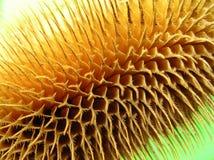 Agarico di mosca fine Fotografia Stock Libera da Diritti