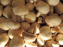 Agaricus. Bunch of Agaricus mushrooms in the kitchen Royalty Free Stock Photography