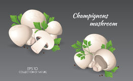 Agaricus campestris met peterselie Stock Foto