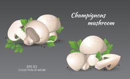 Agaricus campestris met peterselie Stock Afbeelding