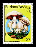 Agaricus campestris, pieczarki seria około 1985, Obraz Stock