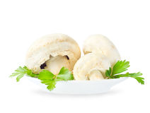 Agaricus mushrooms Stock Photo