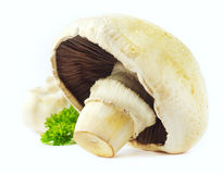 'Agaricus' mushrooms Royalty Free Stock Images