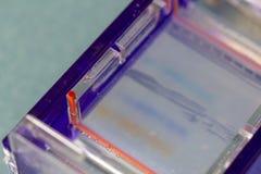 Agarose de gelelektroforese is een methode van gelelektroforese in biochemie, moleculaire biologie en genetica wordt gebruikt die stock afbeelding