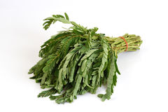 Agasta jako lokalni warzywa Obraz Stock
