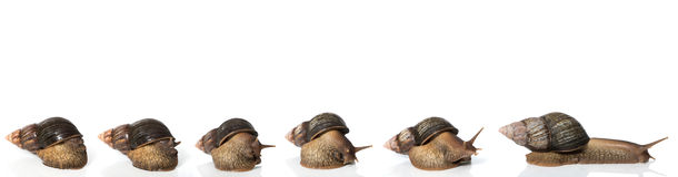 Agata ślimaczek Obraz Stock