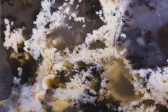 Agate avec des fossiles Photo libre de droits