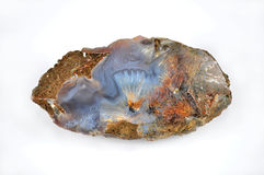 Agate sagenit Stock Photography