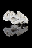Agathe geode slice Royalty Free Stock Photos