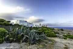 Agava i białe wille przy linią brzegową w Cala d ` Lub Mallorca, Hiszpania Zdjęcia Royalty Free