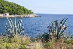 Agava op een overzeese kust Stock Foto's