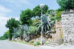 Agava przy tropikalnym ogródem Zdjęcie Stock