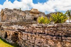 Agava roślina na starej rujnującej ścianie z antyczną Majską świątynią wewnątrz Fotografia Stock