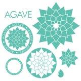 agave Royalty-vrije Stock Afbeeldingen