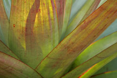 Agave Stock Images