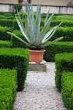 Agave and aloe plant in the flower bed of a convent Stock Image