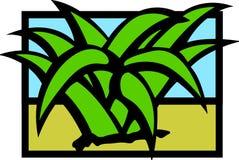 Agave de désert ou plante de maguey Images stock