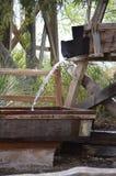 Agave em Tuscon Imagens de Stock