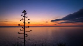 Agave flower against the beautiful sunset Royalty Free Stock Images