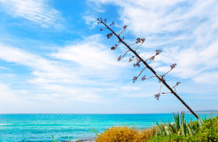 Agave flower like Mediterranean scenery Stock Photography