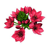 Agave flowers sketch vector graphics Royalty Free Stock Photo