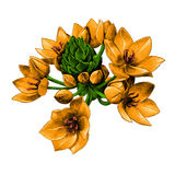 Agave flowers sketch vector graphics Stock Photography