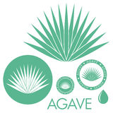 Agave. Isolated objects on white background. Vector illustration (EPS 10 Royalty Free Stock Photo