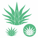 Agave. Isolated objects on white background. Vector illustration (EPS 10 Royalty Free Stock Images