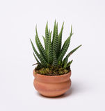 Agave plant Stock Photos
