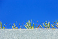 Agave plant and blue sky Stock Image
