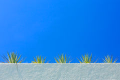 Agave plant and blue sky Royalty Free Stock Photography