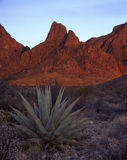 Agave Plant and the Chisos Mountains. An agave plant in the desert and the Chisos Mountains stock photography