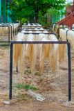 Agave plant fibers, left to dry in the sun, used to build ropes, taken from Tecoh. In the Yucatan peninsula royalty free stock photo