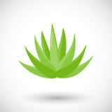 Agave plant  flat icon Stock Photography