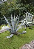Agave plant in the garden. On a meadow at a terasse Royalty Free Stock Photo