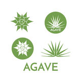 Agave plant green flower logo colorful vector illustration Stock Photography