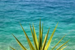 Sea and Agave Plant. Agave plant growing in front of the sea. Selective focus, vibrant colors royalty free stock photo