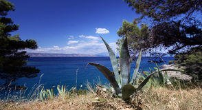 Agave plant by the sea. Stock Photo