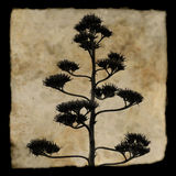 Agave plant silhouette Stock Photography