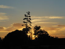 Agave plant at sunset, California. Agave plant silhouetted against sunset in California Royalty Free Stock Images