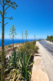 Agave plants along road on south coast of Malta island. With view on Mediterranean sea Stock Photos