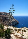 Agave plants on south coast of Malta island. With view on Mediterranean sea Stock Photos
