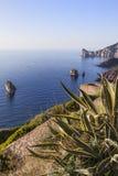 Agave in Sardinien Stockbild