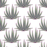 Agave succulent desert seamless pattern. Stock Photo